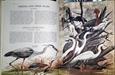 Imagem de BIRDS OF THE WORLD